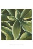 Hosta Detail I Posters by Liz Nichols