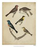 Bonapart Birds I Giclee Print by Charles L. Bonapart