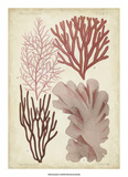 Seaweed Specimen in Coral III Giclee Print by  Vision Studio