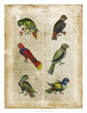 Antiquarian Parrots I Giclee Print by  Vision Studio