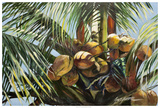 Los Cocos Giclee Print by Suzanne Wilkins