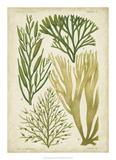 Seaweed Specimen in Green III Giclée-tryk af Vision Studio