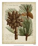 Antique Conifers I Giclée-tryk af Henry Fletcher