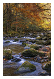 Autumn on Little River Giclee Print by Danny Head