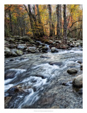 Porter's Creek I Giclee Print by Danny Head