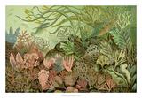 Seaweed Panorama Giclee Print