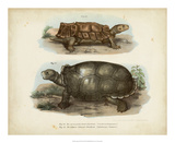 Antique Turtle Pair I Giclee Print by Vision Studio