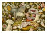 Sea Anemone Panorama Giclee Print