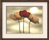 Icelandic Poppies Prints by Yoshizo Kawasaki