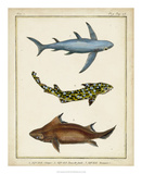 Antique Rays & Fish III Giclee Print by  Chevillet