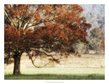 Sunbathed Oak II Giclee Print by Danny Head