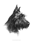 Canine Study II Giclee Print by Ethan Harper