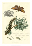 Naturalist's Montage III Giclee Print by  Vision Studio