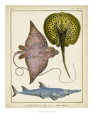 Antique Rays & Fish II Giclee Print by  Chevillet