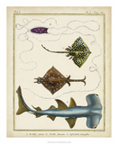 Antique Rays & Fish I Giclee Print by  Chevillet