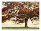 Sunbathed Oak I Giclee Print by Danny Head