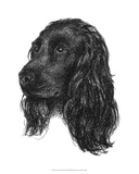 Canine Study IV Giclee Print by Ethan Harper