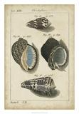 Vintage Shell Study III Giclee Print by  Martini