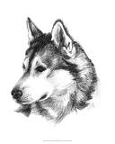 Canine Study III Giclee Print by Ethan Harper