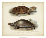 Antique Turtle Pair II Giclee Print by Vision Studio