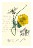 Naturalist's Montage VI Giclee Print by  Vision Studio