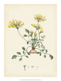 Splendors of Botany VIII Giclee Print