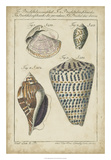 Vintage Shell Study II Giclee Print by  Martini