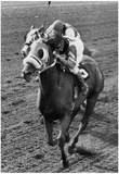 Continuous Count Horse Racing Archival Photo Poster Posters