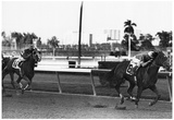 Hot Cop Horse Racing Archival Photo Poster Reprodukcje