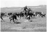 Cowboy Western Cattle Drive Archival Photo Poster Prints
