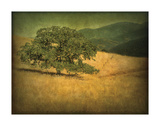 Oak and Fence Study VII Giclee Print by William Guion