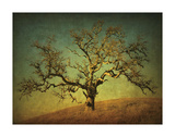 Barn Oak Study III Giclee Print by William Guion