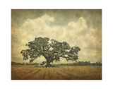 Oak in Cane field Giclee Print by William Guion