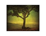 Silhouette Oak Giclee Print by William Guion