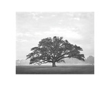 Oak in Field Giclee Print by William Guion