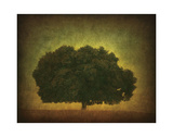 Oak Summer Afternoon Giclee Print by William Guion