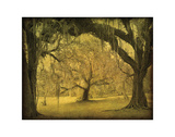 Oak Arch Study Color Giclee Print by William Guion