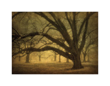 Audubon Grave Infrared Giclee Print by William Guion