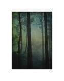 Pines in Fog Study 2 Giclee Print by William Guion