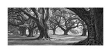 Oak Alley West Row Giclée-tryk af William Guion