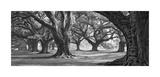 William Guion - Oak Alley West Row Digitálně vytištěná reprodukce