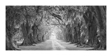 Evergreen Old Allee Giclee Print by William Guion