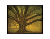Oak in the Fog Park Study I Giclee Print by William Guion