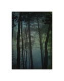Pines in Fog Study 1 Giclee Print by William Guion