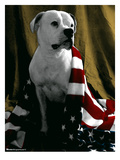 Flag Dog Giclee Print by Mike Martin