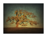 Barn Oak Study I Giclee Print by William Guion