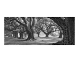 Oak Alley West Row Giclee Print by William Guion