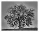 Tire Swing Oak Giclee Print by William Guion