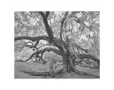 Children's Oak Study 2 Giclee Print by William Guion