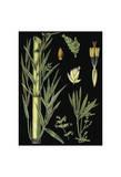 German Educational Plate: Bamboo Prints